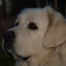 Beska (13)
