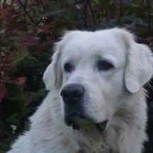 Beska (14)