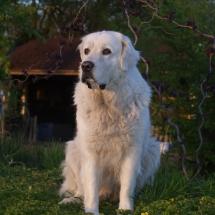 Beska (9)